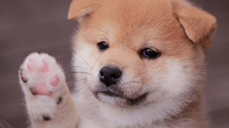 248 weekly gains baby doge coin continues to rally while most crypto asset markets slump